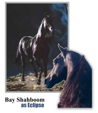 Bay Shahboom