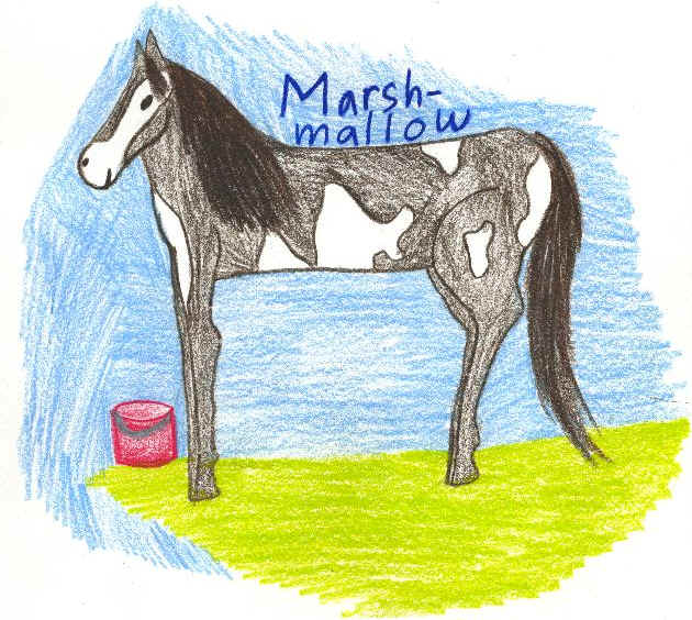 Submitted by Annakai Geshlider, Age 8. Marsh-Mallow